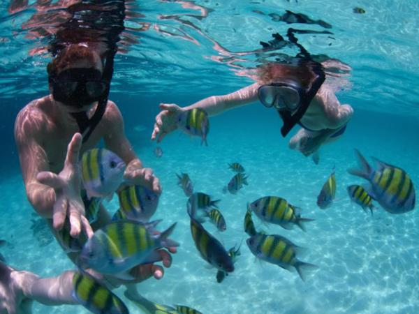Snorkeling One day  PHI PHI